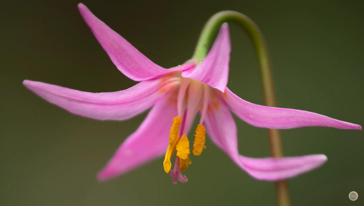 Looking for Something to Photograph? Try the Flowers in Your Yard
