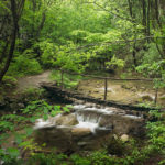 Helpful Forest Photography Composition Tips