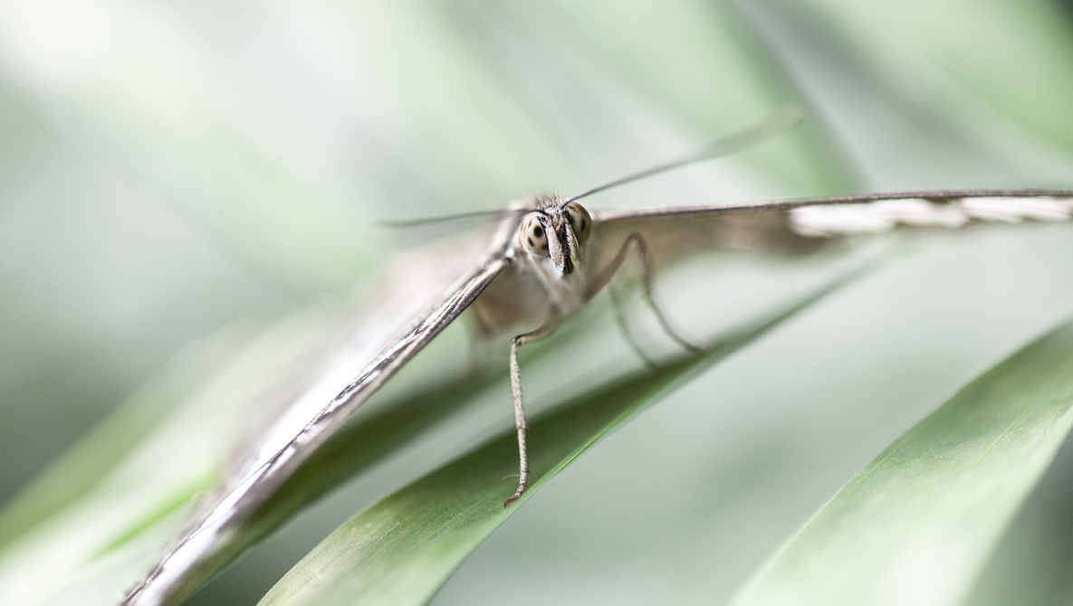 Making the Most of Your Garden During Isolation: How to Guarantee You Get Macro Shots