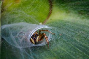 Nature TTL Photographer of the Year 2020 Competition Winners Announced