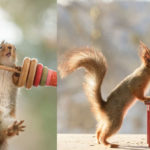 This Photographer Has Spent Over Six Years Capturing Squirrels Doing Human Things
