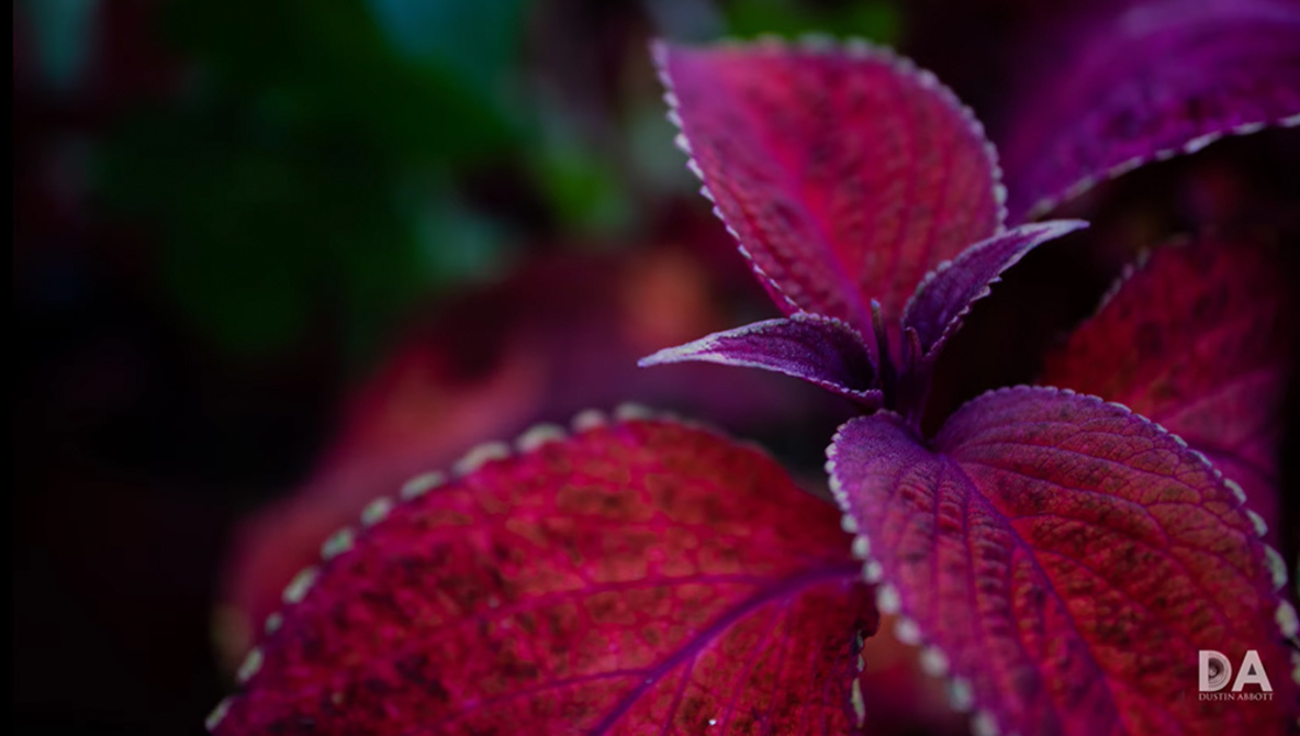 5 Fun Macro Projects You Can Try at Home