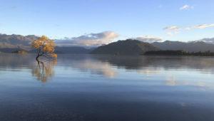 Photographing New Zealand's Iconic Wanaka Tree