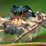 Five Tips for Shooting Better Macro Photography