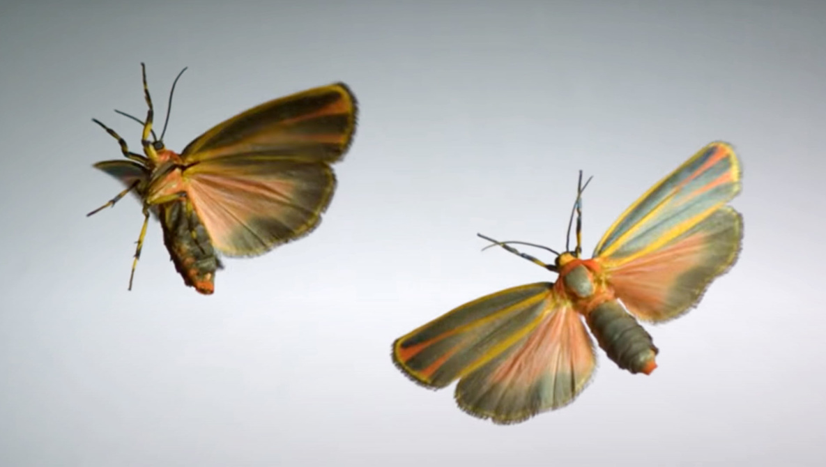Super Slow Motion Insect Flight Captured at Incredible 3,200 FPS