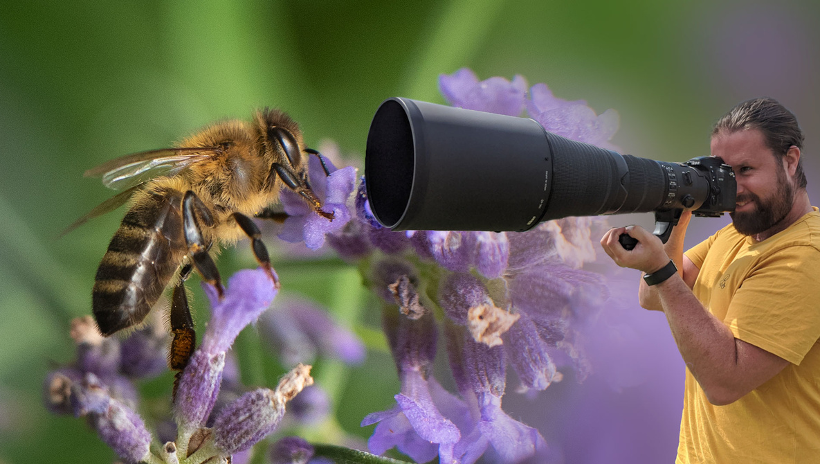 I Turned a 600mm Into a Macro Lens: This Is What Happened