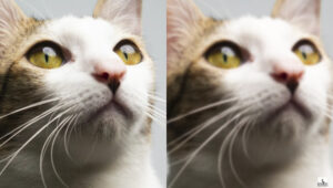 Ever Wonder Why Images Shot at f/22 Are Softer Than f/8?