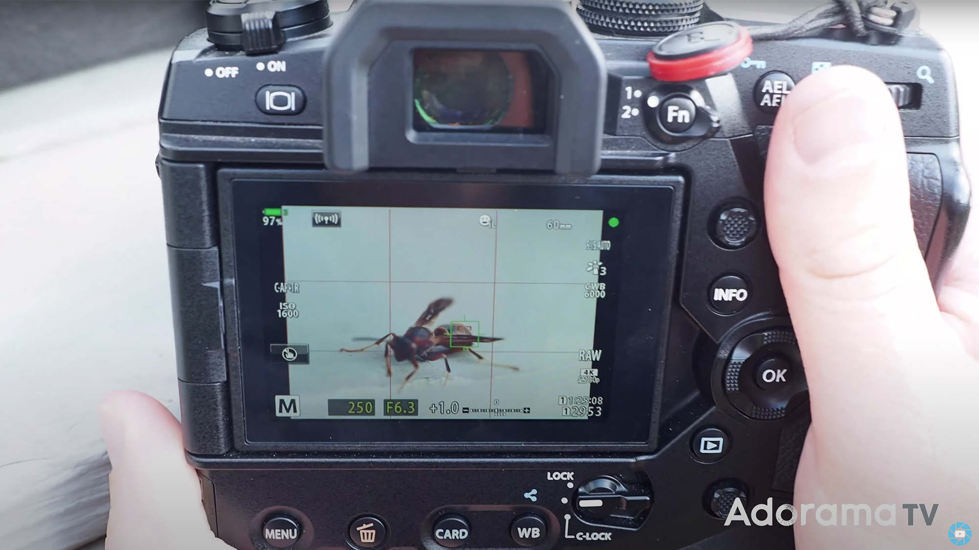 Adorama Announces Macro Photography Challenge with Olympus Prize Package