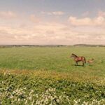 Google's Street View Cameras Capture Artistic Images Without Even Trying