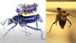 Researchers Build Tiny 'Backpack Camera' Light Enough to Strap to a Beetle