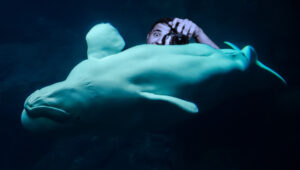 What Shot Is Your Photography White Whale?