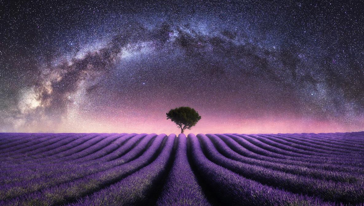 Brace Yourself: Lavender Season Is Coming