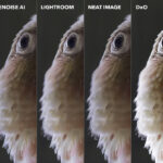 The Image Noise Reduction Challenge: We Compare the Best Noise Reduction Software for Photographers