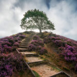 Heather Season Is Here, This Is How to Photograph It