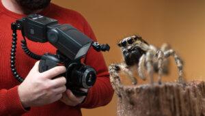 Macro Bug Photography on a Budget