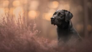 Want to Know How to Start Creating Beautiful Dog Portraits? Check Out This Video